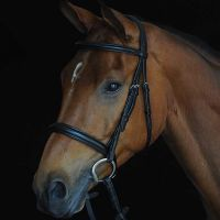 COLLEGIATE COMFORT CROWN PADDED RAISED CAVESSON BRIDLE