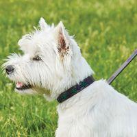 WEATHERBEETA POLO LEATHER DOG LEAD - PURPLE & TEAL